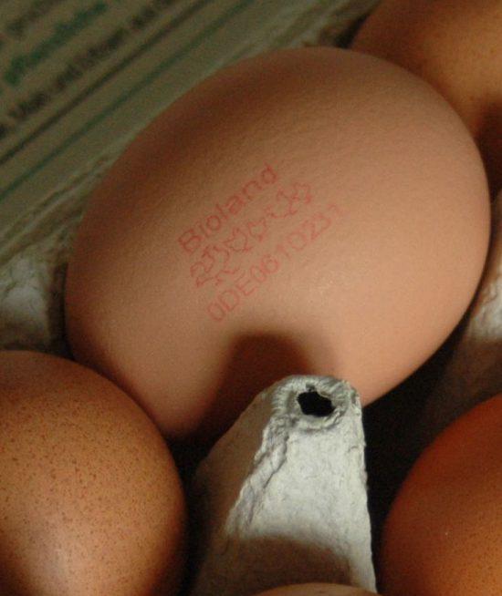 Bioland Eier
